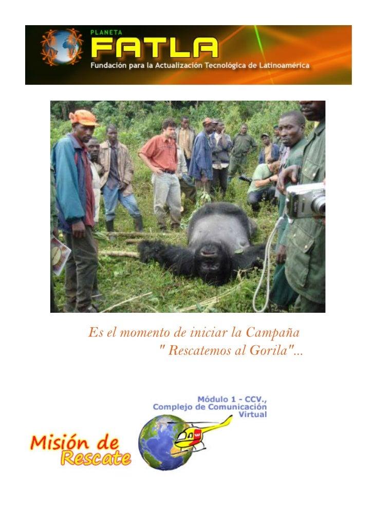 Reportaje gorilas en peligro de extinción