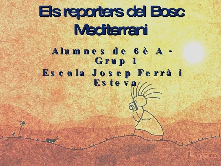 Els reporters del Bosc Mediterrani <ul><li>Alumnes de 6è A - Grup 1 </li></ul><ul><li>Escola Josep Ferrà i Esteva </li></ul>