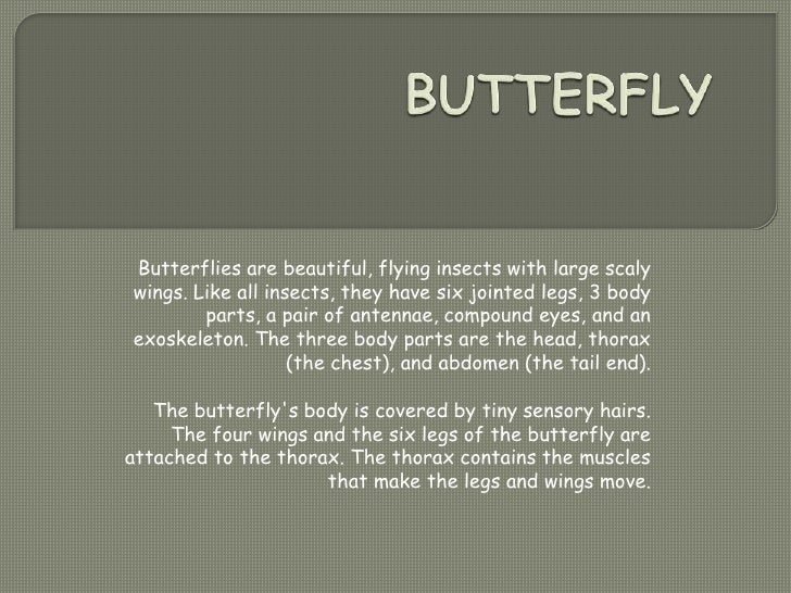 BUTTERFLY<br />Butterflies are beautiful, flying insects with large scaly wings. Like all insects, they have six jointed l...