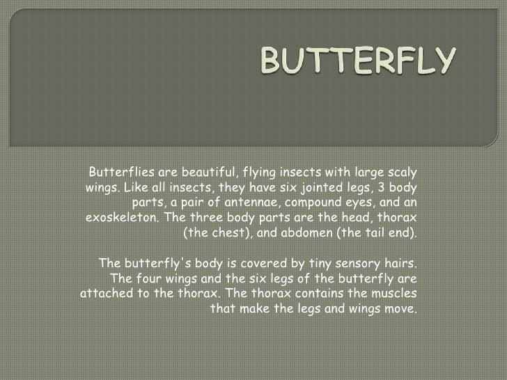 Report butterfly by nur ilmi