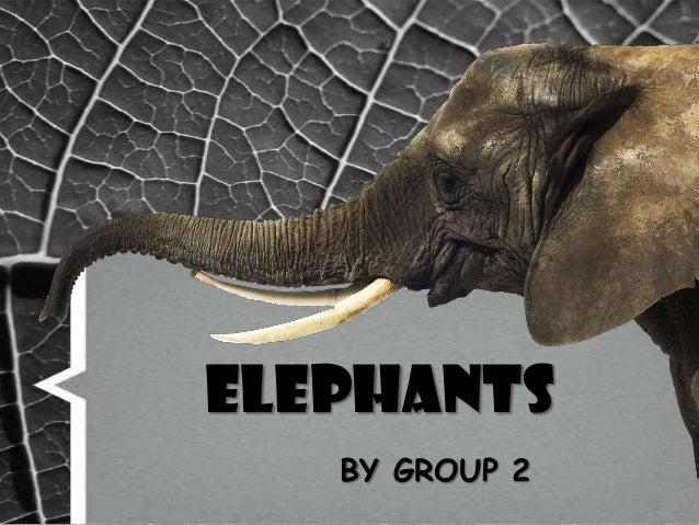 Report elephants