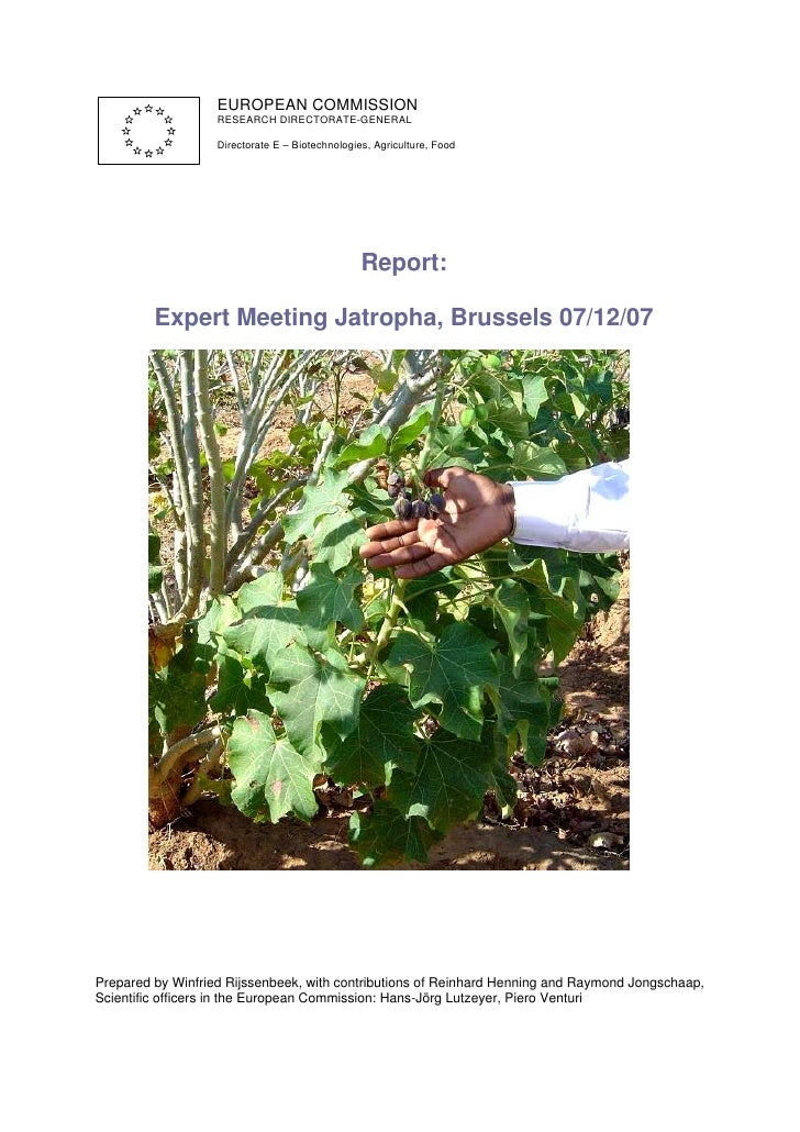 Report Expert Meeting on Jatropha; Brussels