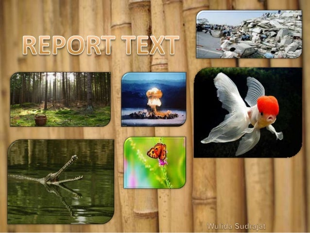 What is report text?   A report provides factual information about a   specific subject like social phenomena (e.g.   riot...