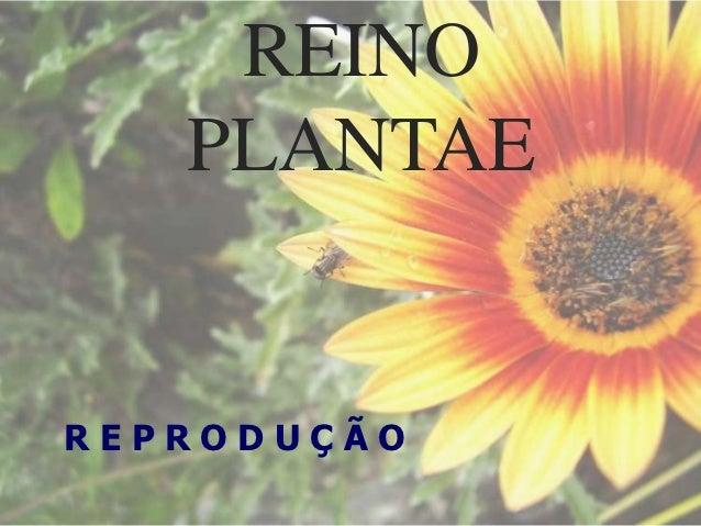 REINO   PLANTAEREPRODUÇÃO
