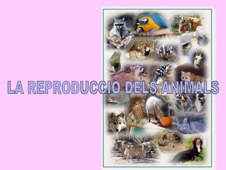 Reproducció animals p.point