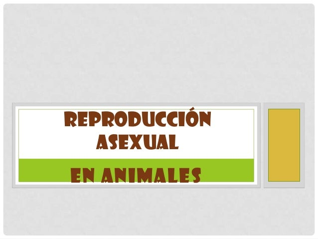 REPRODUCCIÓN   ASEXUALEN ANIMALES