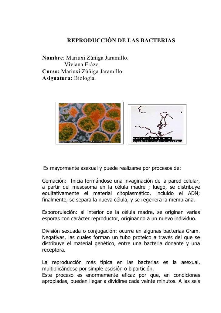 ReproduccióN De Las Bacterias