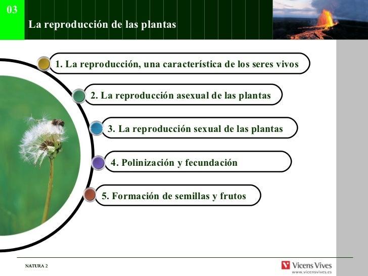 La reproducci ón de las plantas 4.  Polinizaci ón y fecundación   1.  La reproducci ón, una característica de los seres vi...