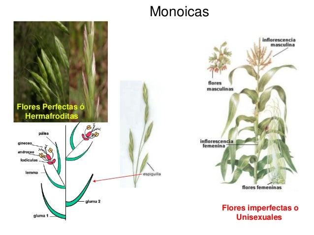 Monografia de plantas medicinales de la region arequipa for Concepto de plantas ornamentales