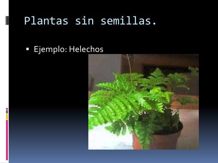 Reproducci n de plantas for Plantas sin semillas