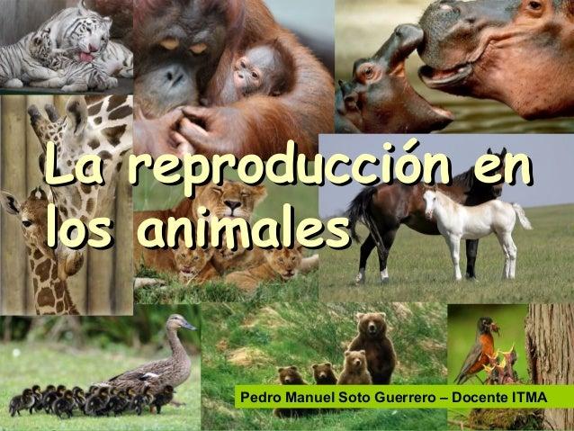 La reproducción enLa reproducción en los animaleslos animales Pedro Manuel Soto Guerrero – Docente ITMA