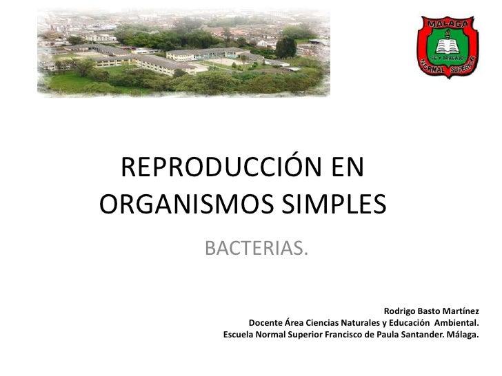 REPRODUCCIÓN ENORGANISMOS SIMPLES      BACTERIAS.                                             Rodrigo Basto Martínez      ...