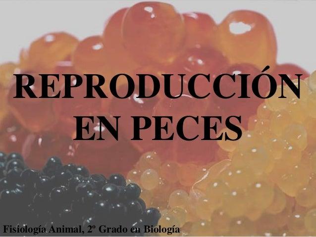 Reproducci n en peces power for Reproduccion en peces