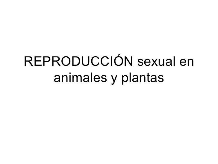REPRODUCCIÓN sexual en animales y plantas