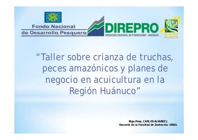 Reproducci n y cultivo de peces amazonicos en la regi n de for Reproduccion de peces ornamentales
