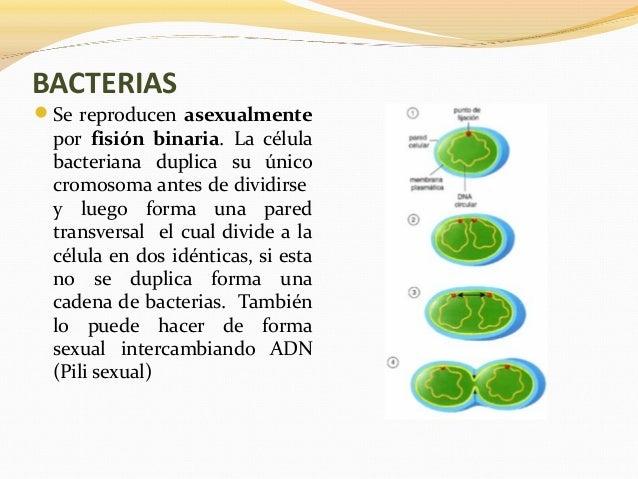 Reproducción Sexuada y Asexuada (animales y vegetales)