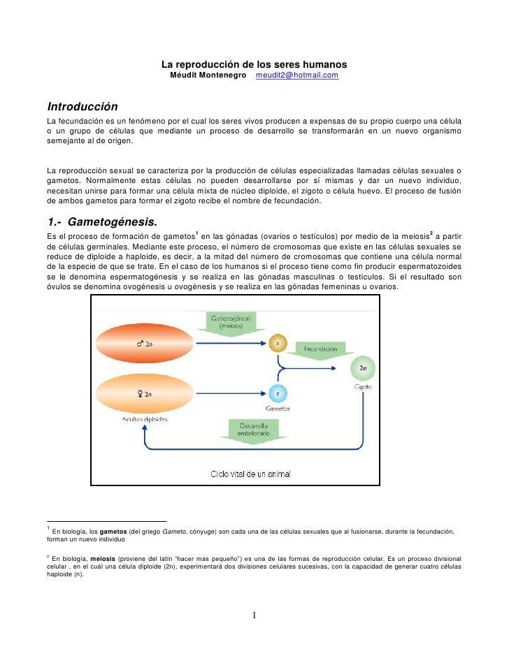 La reproducción de los seres humanos<br />Méudit Montenegro    meudit2@hotmail.com<br />Introducción<br />La fecundación e...