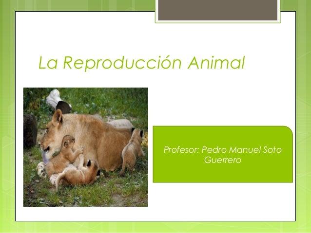 Reproduccion Asexual y Sexual en Animales