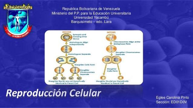 Republica Bolivariana de Venezuela Ministerio del P.P. para la Educación Universitaria Universidad Yacambú Barquisimeto – ...