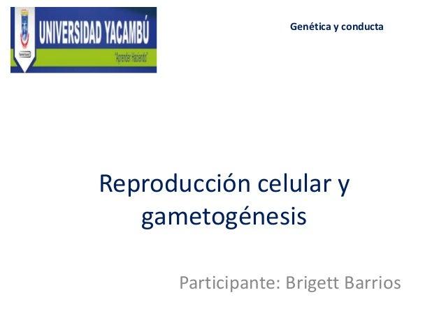 Reproducción celular y gametogénesis Participante: Brigett Barrios Genética y conducta