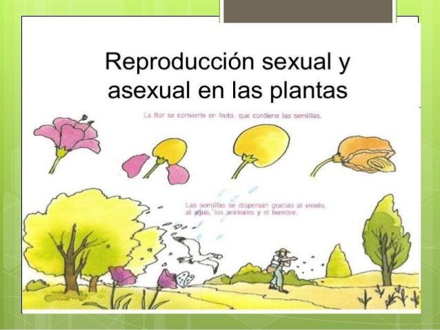 Reproduccion en las plantas - Cosas sobre las plantas ...