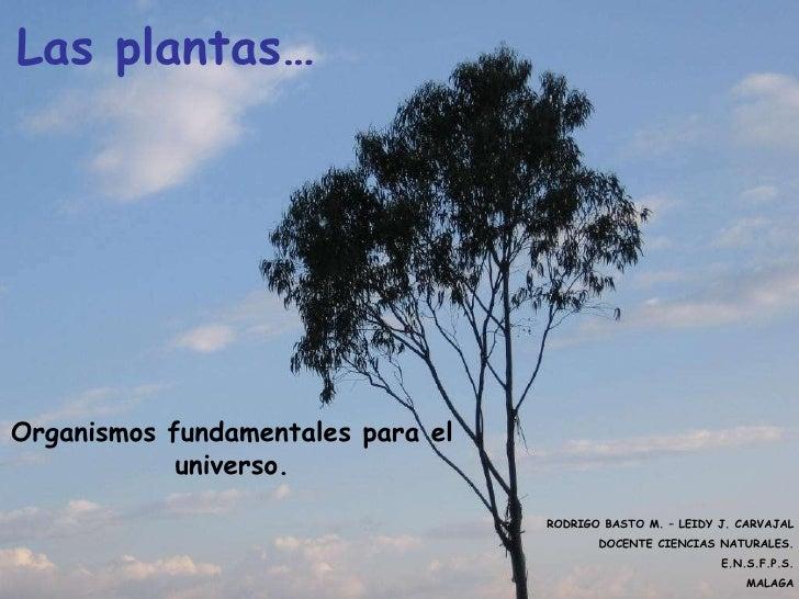 Las plantas…<br />Organismos fundamentales para el universo.<br />RODRIGO BASTO M. – LEIDY J. CARVAJA...