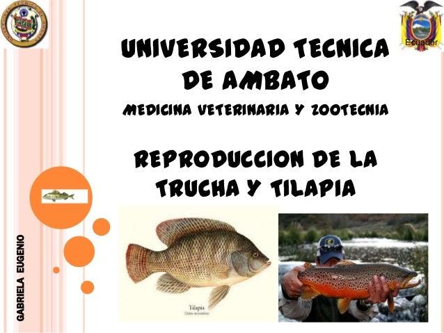 Reproduccion tilapias for Proyecto de crianza de truchas pdf