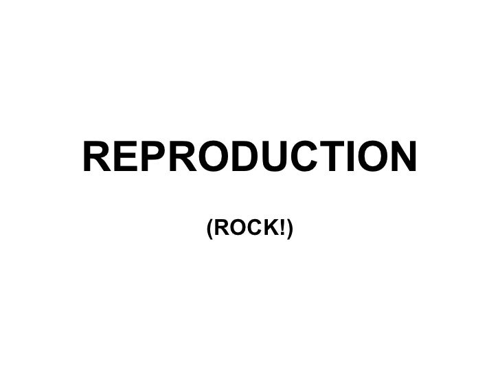 REPRODUCTION (ROCK!)