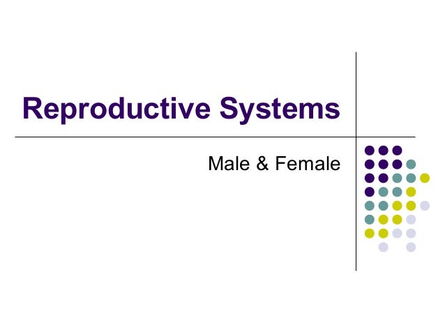 Reproductive Systems           Male & Female