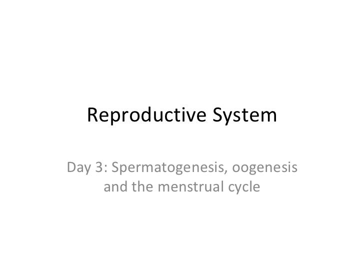 Reproductive System Day 3: Spermatogenesis, oogenesis and the menstrual cycle