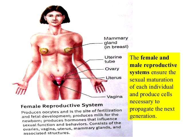 Reproductive systems of male & female