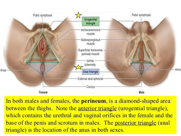 Organs female sex with person and male