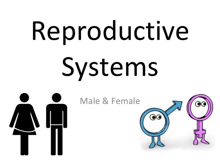Reproductive systems presentation   version 2