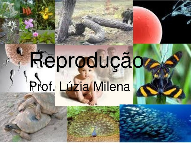 Reprodução Prof. Lúzia Milena