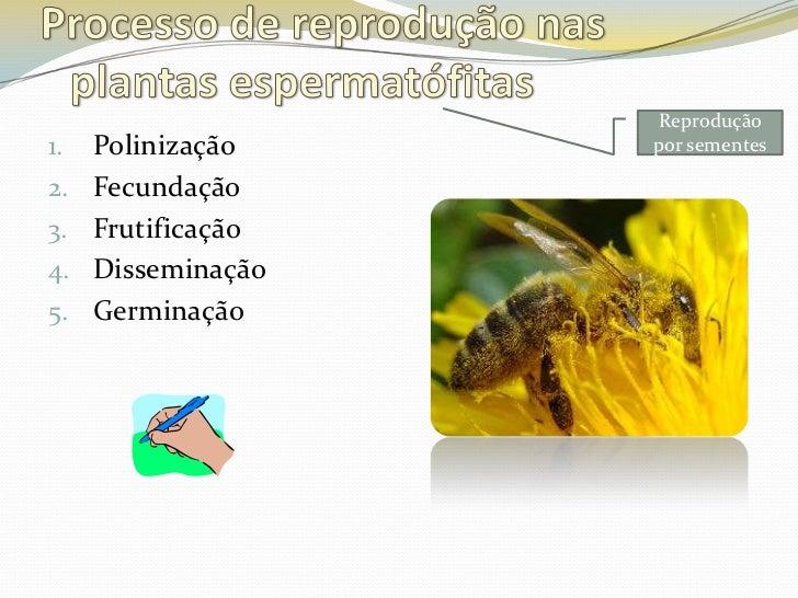 reprodu o de plantas   flor