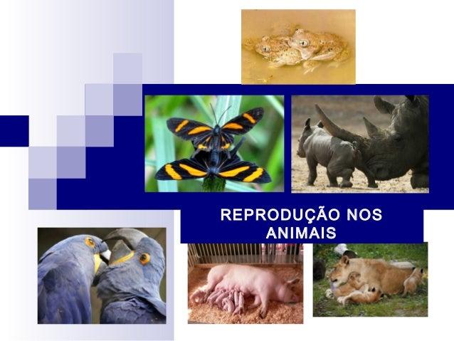 Reprodução dos animais (alterada)