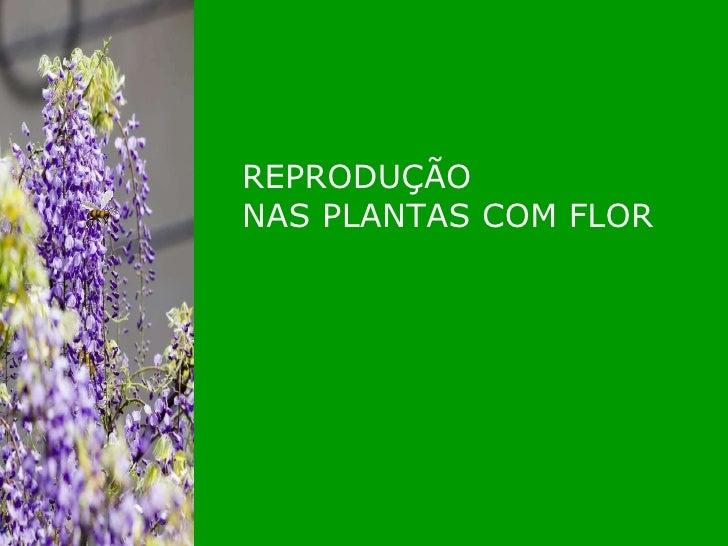 REPRODUÇÃO NAS PLANTAS COM FLOR