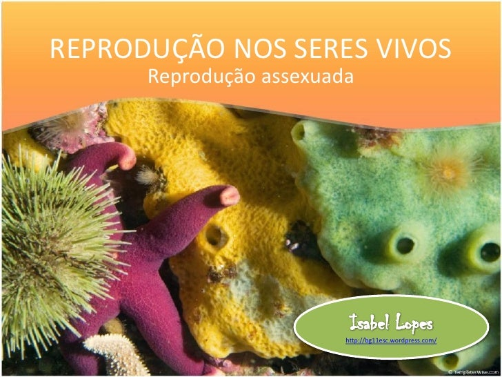 REPRODUÇÃO NOS SERES VIVOS      Reprodução assexuada                         http://bg11esc.wordpress.com/