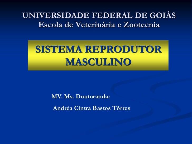 UNIVERSIDADE FEDERAL DE GOIÁS   Escola de Veterinária e Zootecnia   SISTEMA REPRODUTOR        MASCULINO      MV. Ms. Douto...