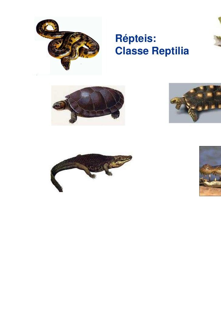 Répteis:Classe Reptilia