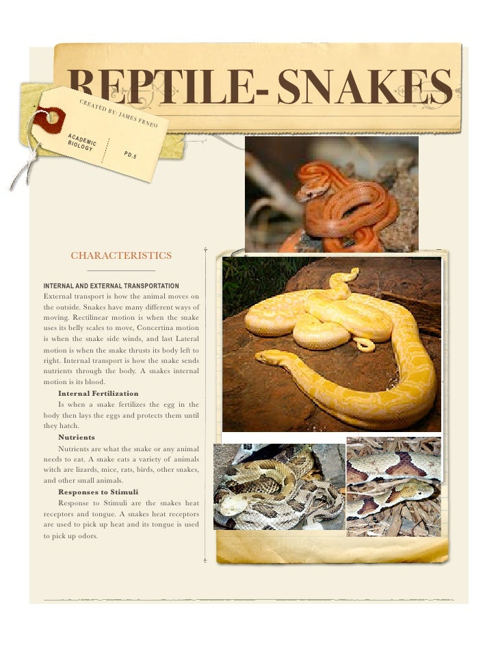REPTILE- SNAKES               CRE                     ATE                           DB                              Y: J  ...