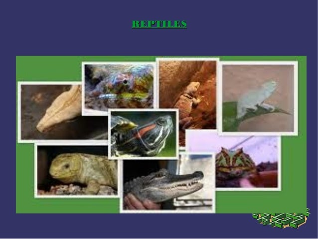 Reptiles ok