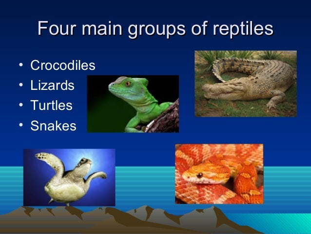 What Are the Main Characteristics of Reptiles?
