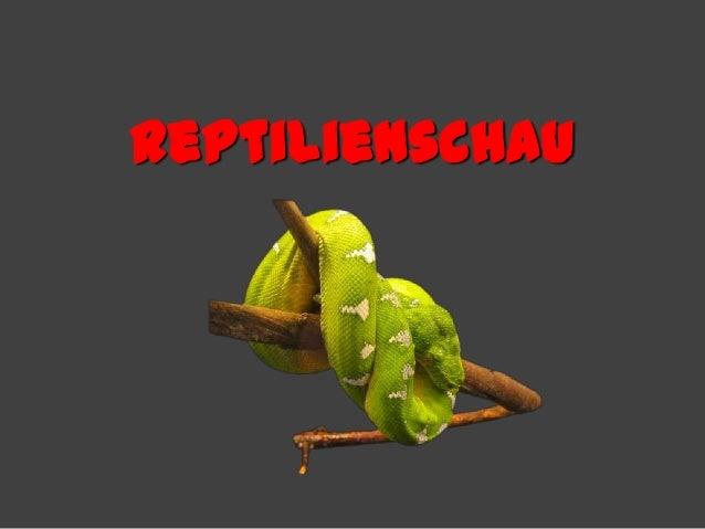 Reptilienschau