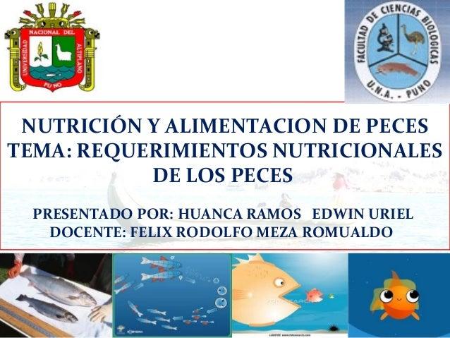 Requerimientos nutricionales en peces for Tabla de alimentacion para peces cachama