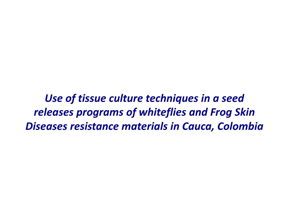 Use of tissue culture techniques in a seed releases programs of whiteflies and frog skin diseases resistance materials in Cauca, Colombia