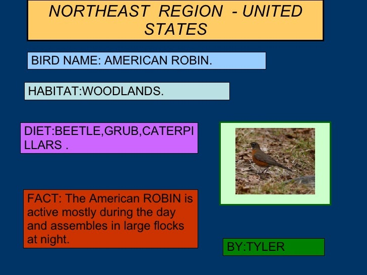 NORTHEAST  REGION  - UNITED STATES BIRD NAME: AMERICAN ROBIN. HABITAT:WOODLANDS. DIET:BEETLE,GRUB,CATERPILLARS . FACT: The...