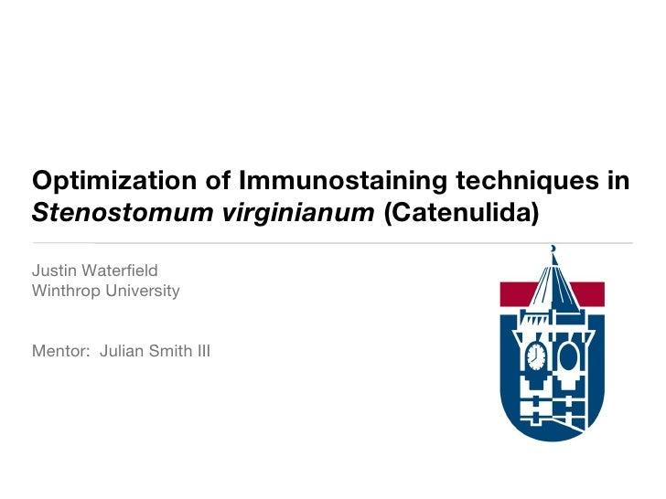 Optimization of Immunostaining techniques in  Stenostomum virginianum  (Catenulida) Justin Waterfield Winthrop University ...