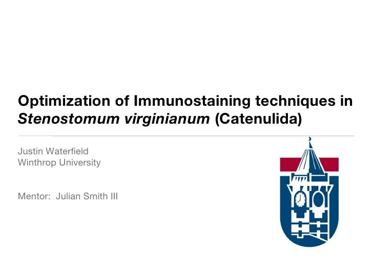 Optimization of Immunostaining techniques in Stenostomum virginianum