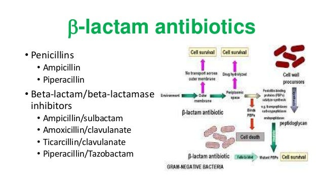 Mechanism of action. Amoxicillin acts by inhibiting bacterial cell wall synthesis. Lack of bacterial cell wall results in death due to lysis of bacteria. So amoxicillin is.